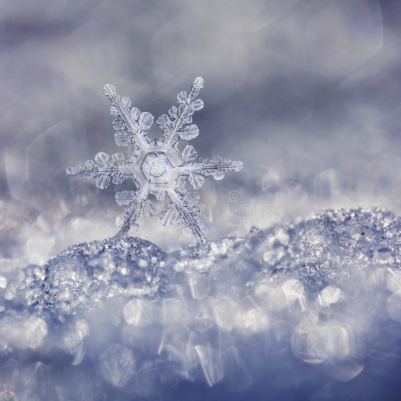 Dekorative blaue Schneeflocke auf Sunny Day lizenzfreie stockbilder