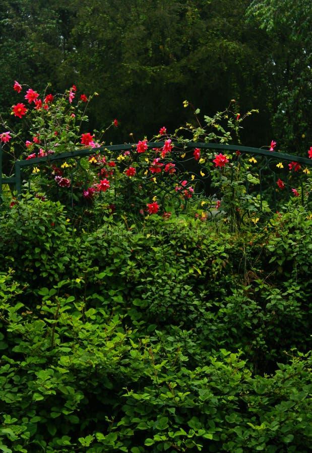 Dekorative Blumen am frühen Morgen im kodaikanal lizenzfreie stockbilder