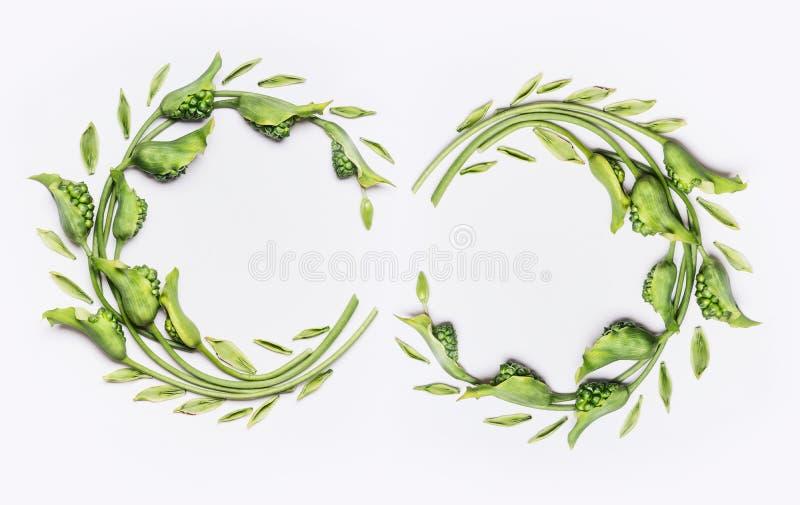 Dekorative botanische Blumendoppelt-Kranzrahmen gemacht von den grünen verschiedenen Blumen und von den Blättern, flache Lage stockbild