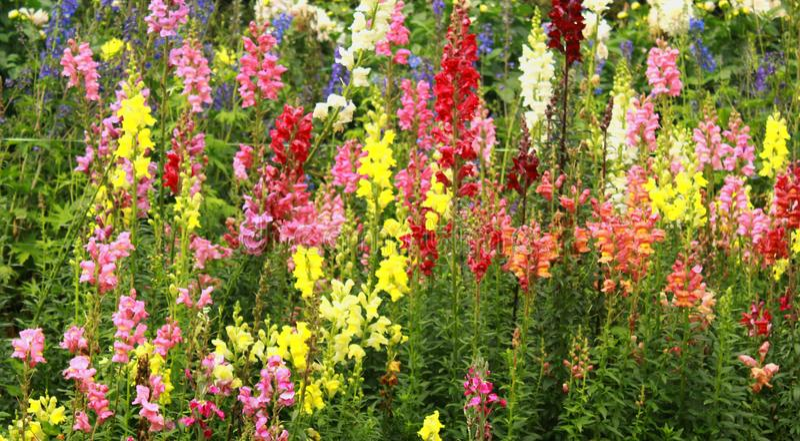 Dekorative Gartenblumen und -knospen im Bryant parken, kodaikanal lizenzfreie stockfotografie