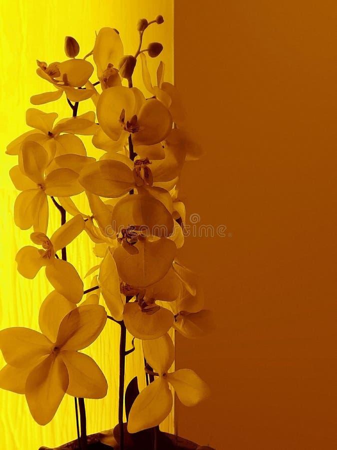 Dekorative gelbe Blumen stockfotos