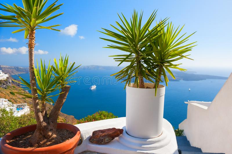 Dekorative Palmen in den Töpfen auf der Terrasse, die das Meer übersieht stockbilder