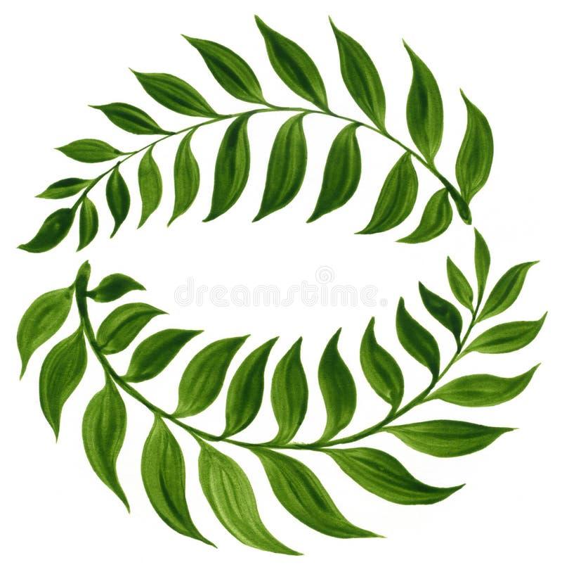 Dekorative Verzierung mit grünen Curryblättern vektor abbildung