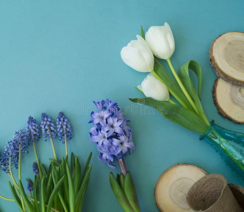 Dekorative Zusammensetzung Ostern auf einem blauen Hintergrund Weiße Tulpen, Blumentöpfe, unbemalte Eier und ein Baum stockbild
