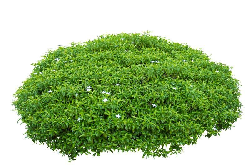 Dekorativer Baum lokalisiert auf weißem Hintergrund mit geschlossenem Weg stockbilder