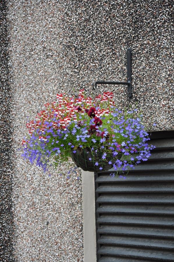 Dekorativer Blumentopf mit den blauen und roten Blumen auf der Wand lizenzfreies stockfoto