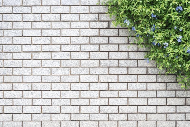 Dekorativer grüner Garten auf einer Backsteinmauer lizenzfreies stockbild
