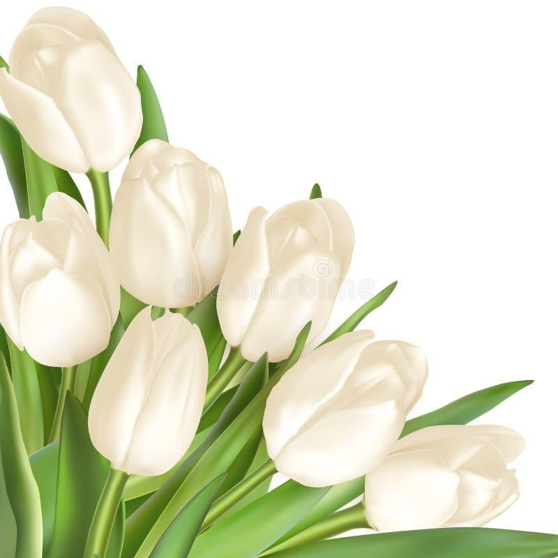 Dekorativer Hintergrund der Tulpen ENV 10 vektor abbildung