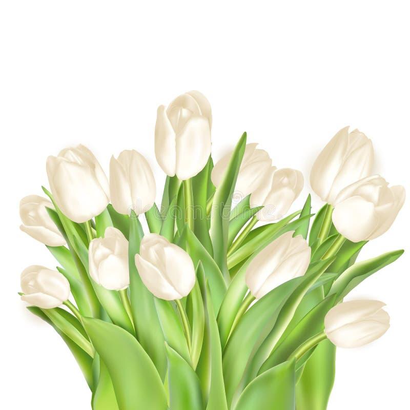 Dekorativer Hintergrund der Tulpen ENV 10 lizenzfreie abbildung