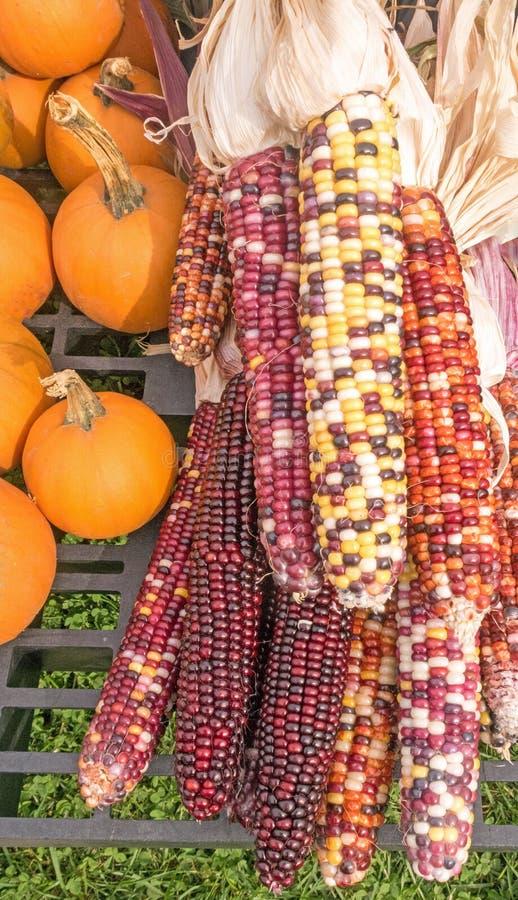 Dekorativer indischer Mais und Kürbise lizenzfreie stockfotografie