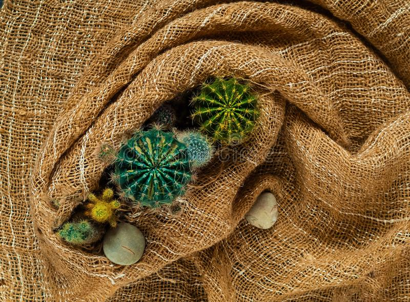 Dekorativer kleiner farbiger Kaktus auf einem Hintergrund von Leinwand, Draufsicht, freier Raum für Text stockfotografie