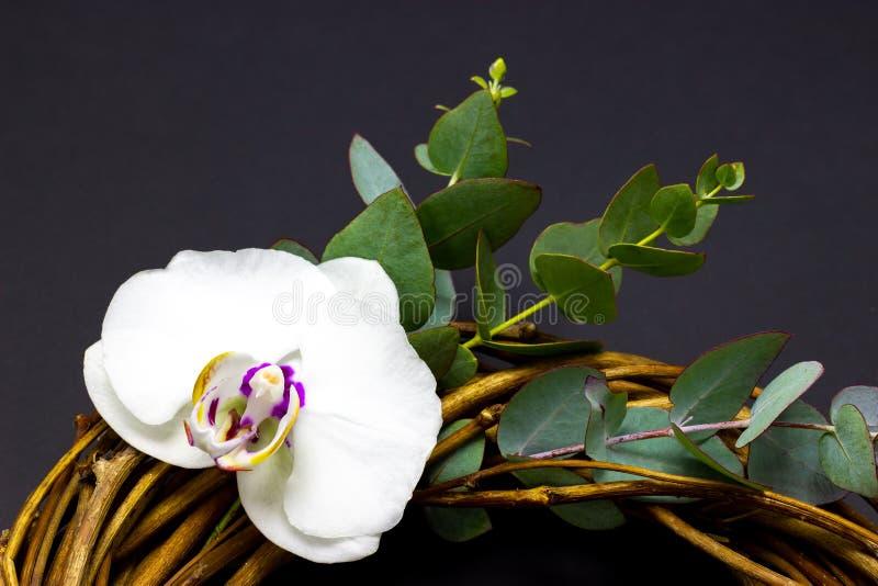 Dekorativer runder Kranz mit Orchideenblumen und Eukalyptus auf einem dunklen Hintergrund lizenzfreies stockfoto