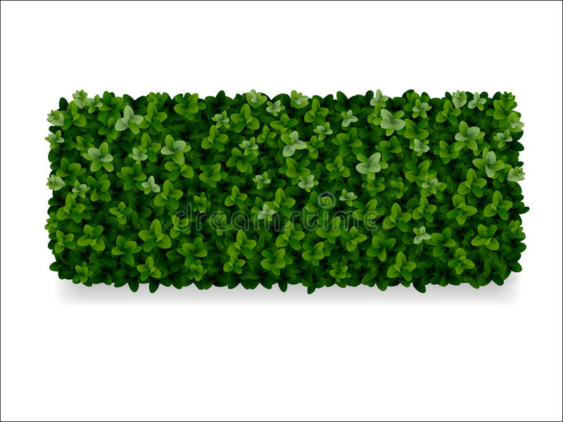 Dekorativer Zaun des Buchsbaumes stock abbildung