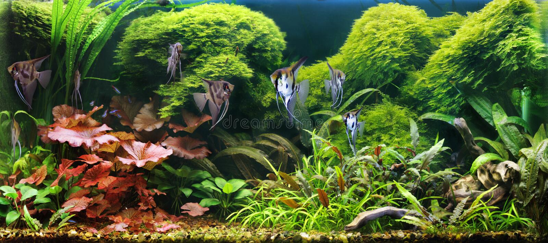 Dekoratives Aquarium lizenzfreies stockfoto