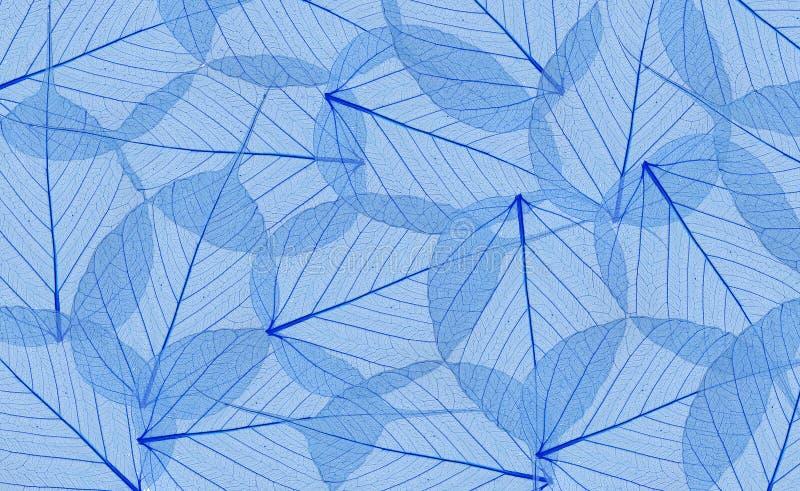 Dekoratives blaues Skelett verlässt Hintergrund lizenzfreies stockfoto