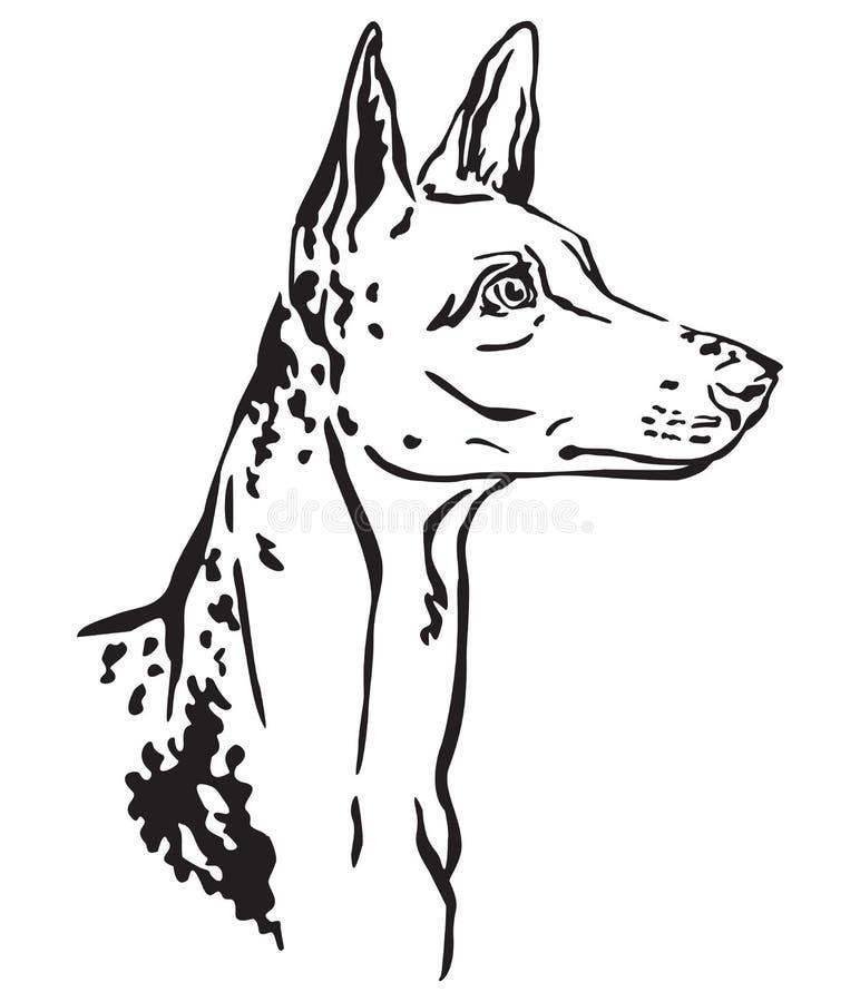 Dekoratives Porträt der Ibizan-Jagdhund-Vektorillustration vektor abbildung