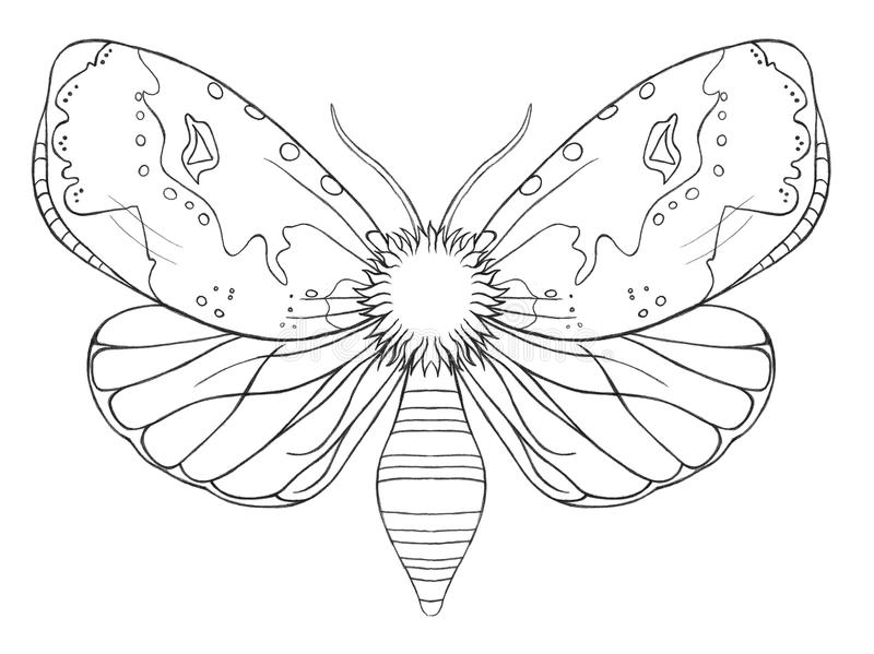 Dekoratives Schmetterlingsinsekt des Aquarells, gezeichnete Kontur, Druck, Schwarzweiss-Farbton, antistress auf weißem Hintergrun vektor abbildung