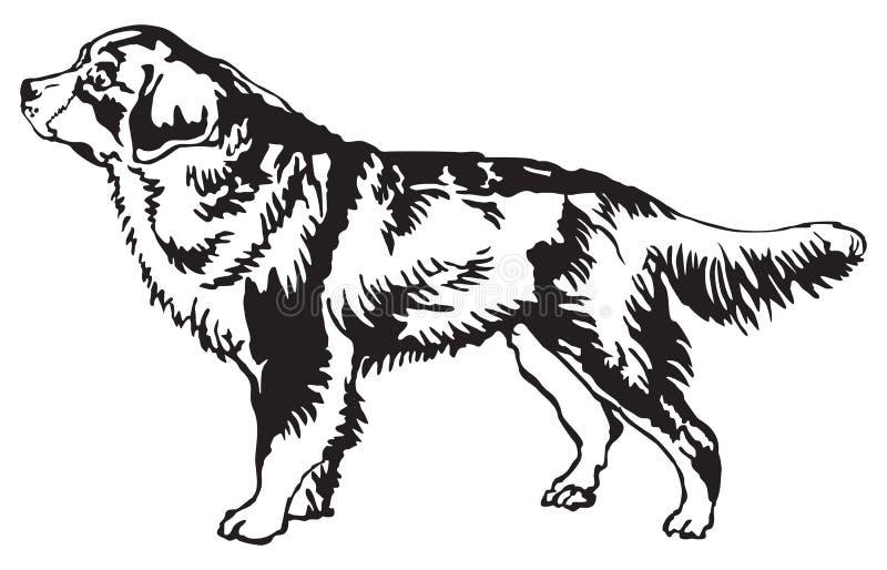 bernese gebirgshundebrut vektor abbildung illustration