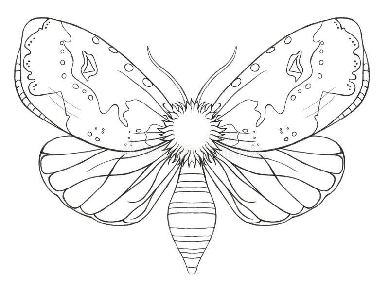 Dekorativt fjärilskryp för vattenfärg, dragen kontur, tryck, svartvit färgläggning som är antistress på vit bakgrund för decorat vektor illustrationer