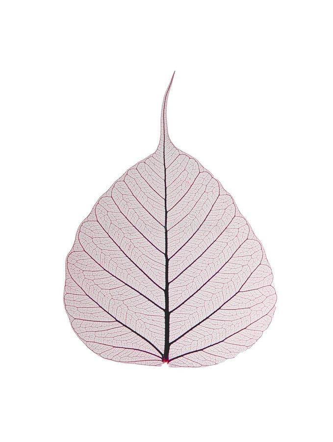 dekorativt leafskelett royaltyfri bild