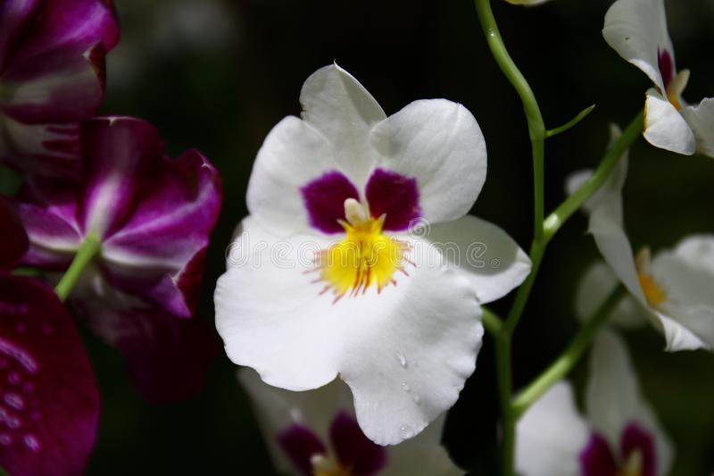 Dekorativt med färgrika orkidér i trädgården royaltyfri foto