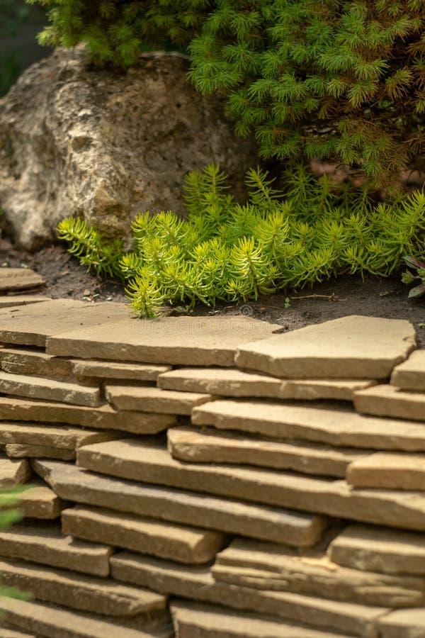Dekorativt stena murverket i trädgården Plant tänd - bruna stenar arkivfoton