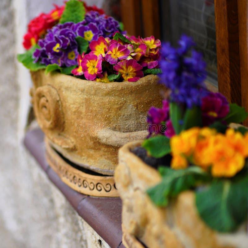 Dekorerad fönsterfönsterbräda med vårblommor i krukor royaltyfri bild