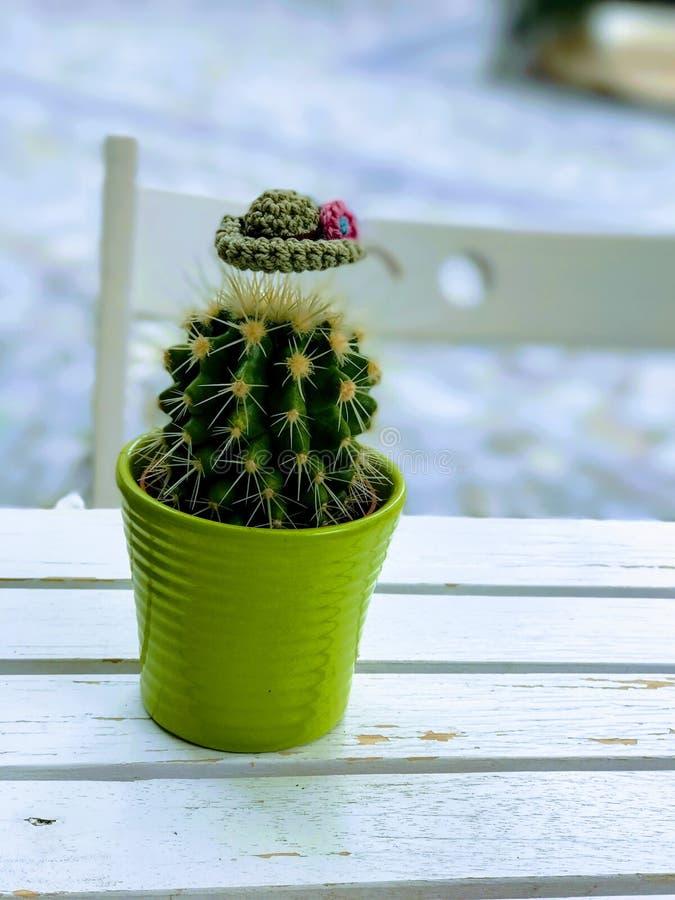 Dekorerad kaktus fotografering för bildbyråer