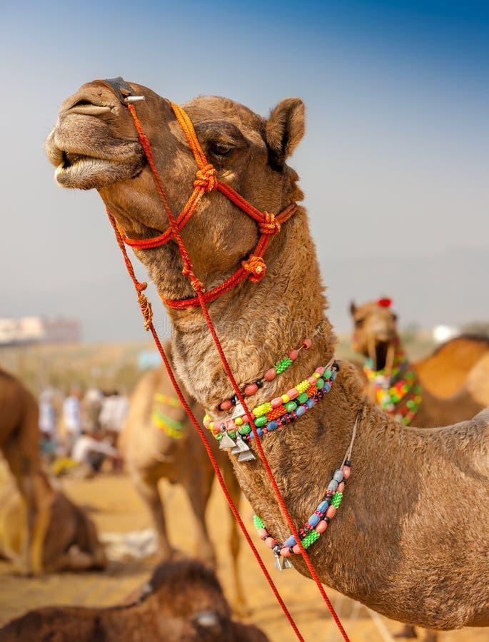 Dekorujący wielbłąd przy Pushkar jarmarkiem - India fotografia stock