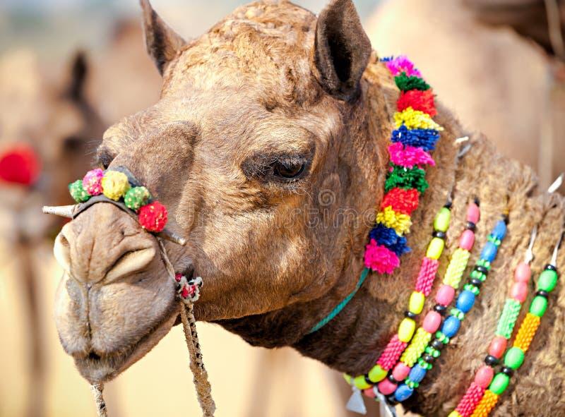 Dekorujący wielbłąd przy Pushkar jarmarkiem Rajasthan, India obrazy royalty free