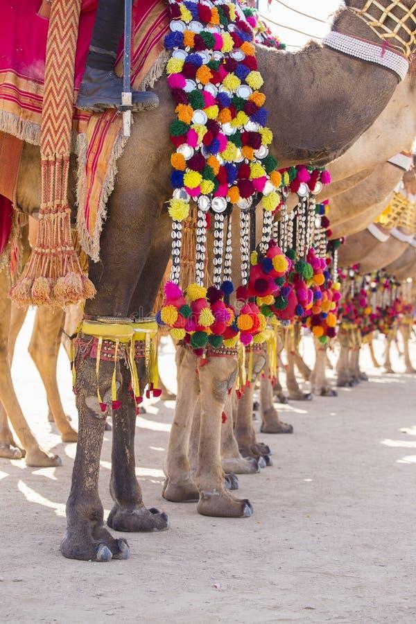 Dekorujący wielbłąd przy Pustynnym festiwalem w Jaisalmer, India Wielbłądzich ` s cieków zamknięty up zdjęcia royalty free