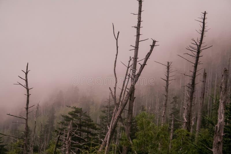 Delével e nevoento nas montanhas fumarentos fotografia de stock