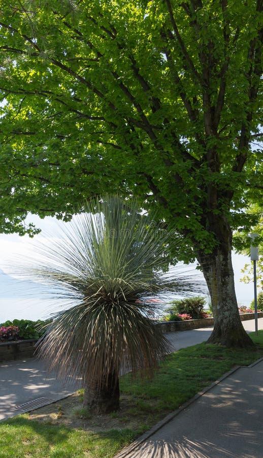 Del av promenad på Montreux Schweiz royaltyfria bilder