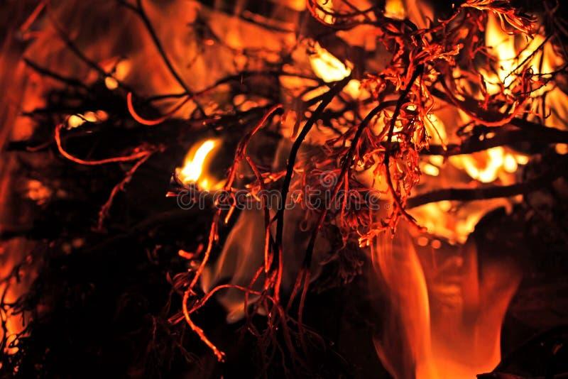 Del Bushfire cierre para arriba fotografía de archivo libre de regalías