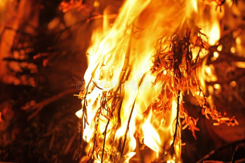 Del Bushfire cierre para arriba imagen de archivo libre de regalías
