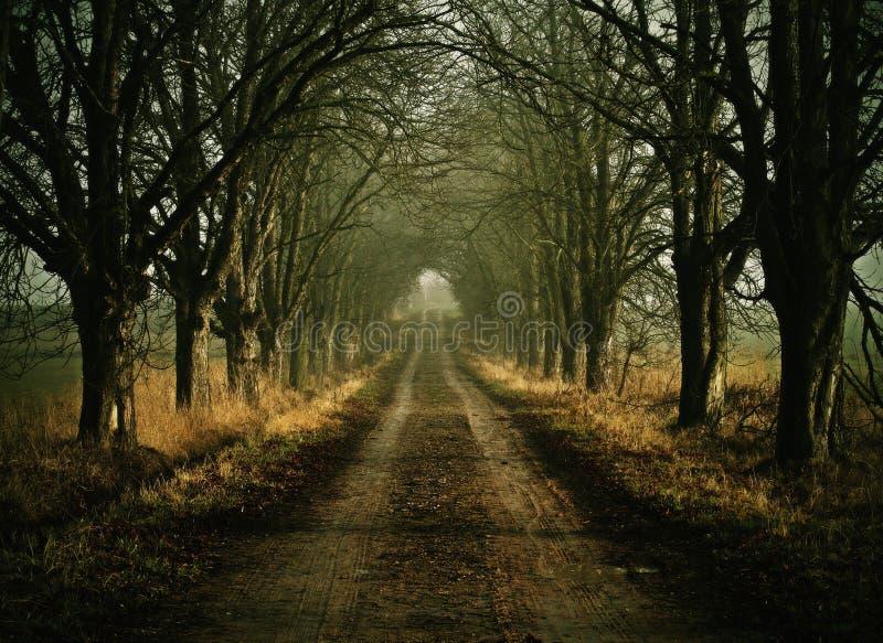 Del callejón horror oscuro casi fotografía de archivo libre de regalías