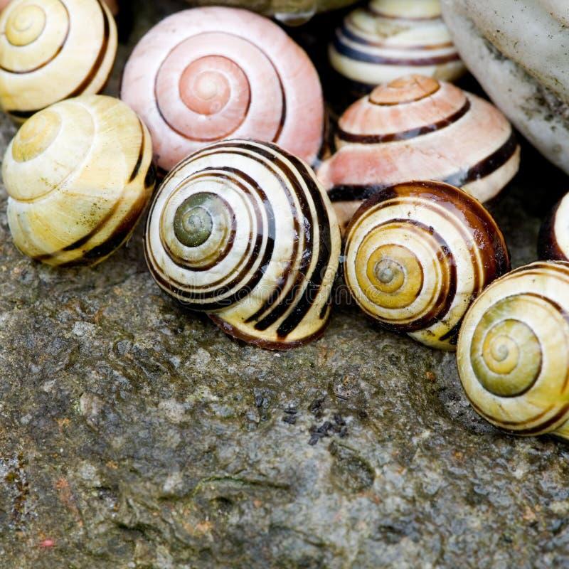 Del caracol todavía del shell vida fotografía de archivo libre de regalías