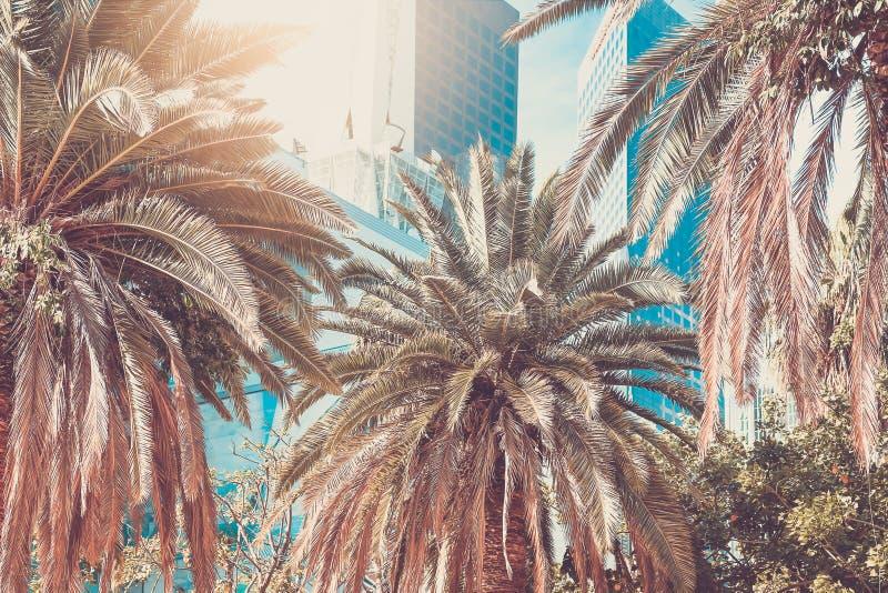 Del centro; Palme e grattacieli nella città di Los Angeles Vint fotografia stock libera da diritti