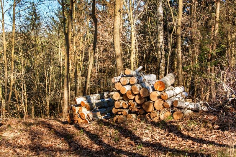 Del corte abedul en una pila en el trabajo del bosque en árboles de la tala del bosque Leña Tarde de la primavera en el bosque imagen de archivo