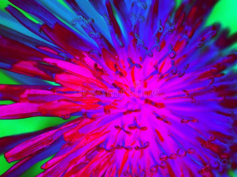 Del diente de león cierre para arriba y salvaje abstractos imagen de archivo libre de regalías