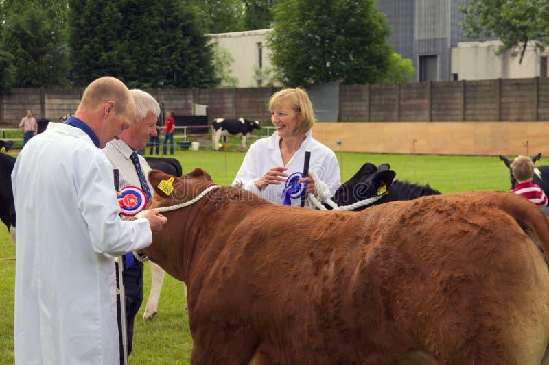 Del este - demostración de ganado abierta del kilbride 2014 fotos de archivo libres de regalías