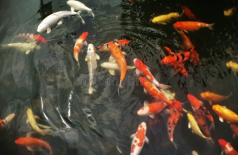 del pesce pozzo dentro fotografia stock