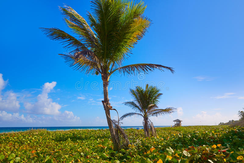 Del Ray Delray beach Florida USA. Del Ray Delray beach in Florida USA palm trees in the shore royalty free stock photography