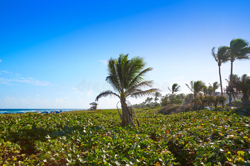 Del Ray Delray beach Florida USA. Del Ray Delray beach in Florida USA palm trees in the shore stock photography