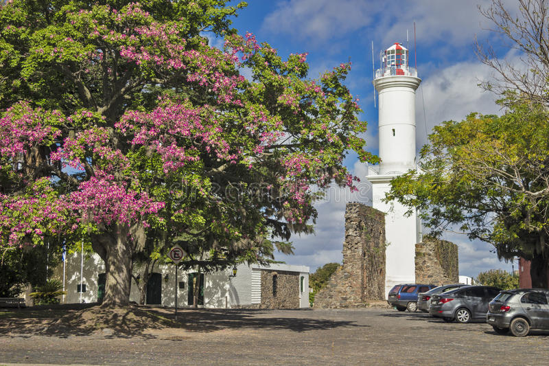 Del Sacramento de Uruguai - de Colonia - árvore de florescência do bougainvill foto de stock
