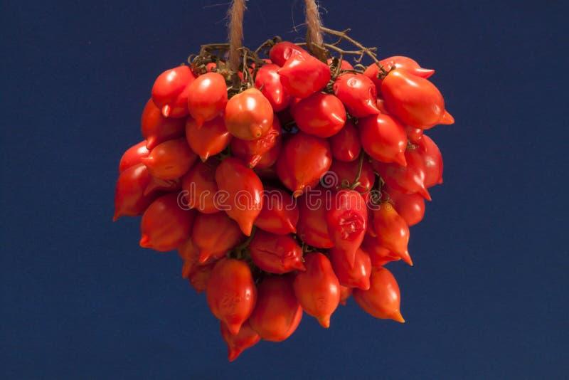 Del Vesuvio - tomate de Pomodorino del Piennolo photographie stock libre de droits