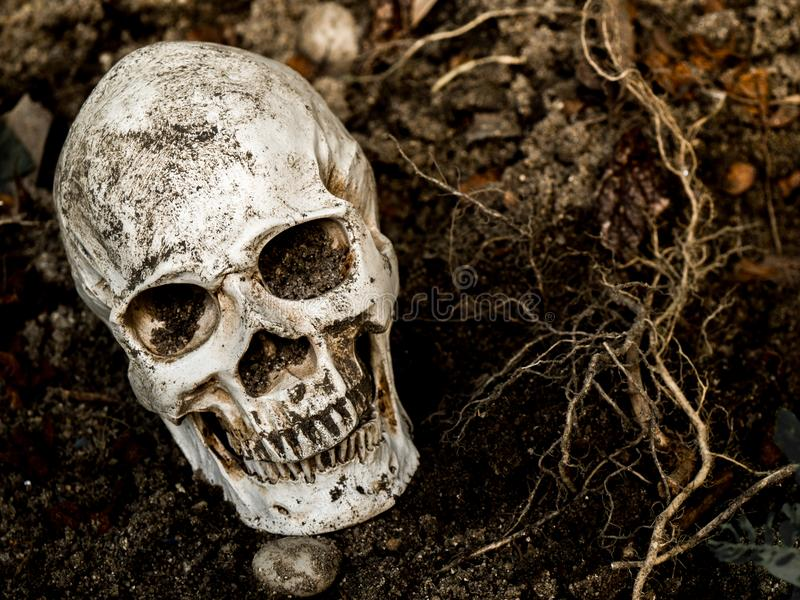 Delante del cráneo humano enterrado en el suelo con las raíces del árbol en el lado El cráneo tiene suciedad atada al cráneo Conc fotos de archivo libres de regalías