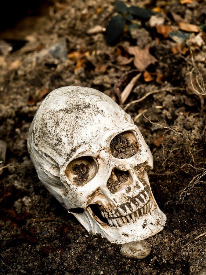 Delante del cráneo humano enterrado en el suelo con las raíces del árbol en el lado El cráneo tiene suciedad atada al cráneo Conc fotografía de archivo libre de regalías