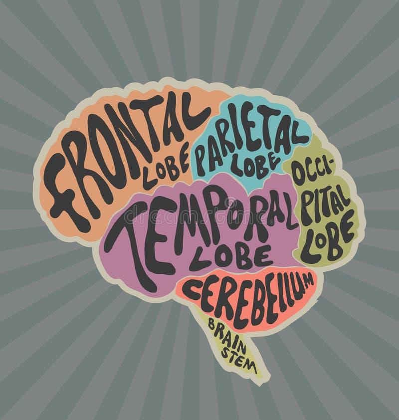 Delar av den mänskliga hjärnan stock illustrationer