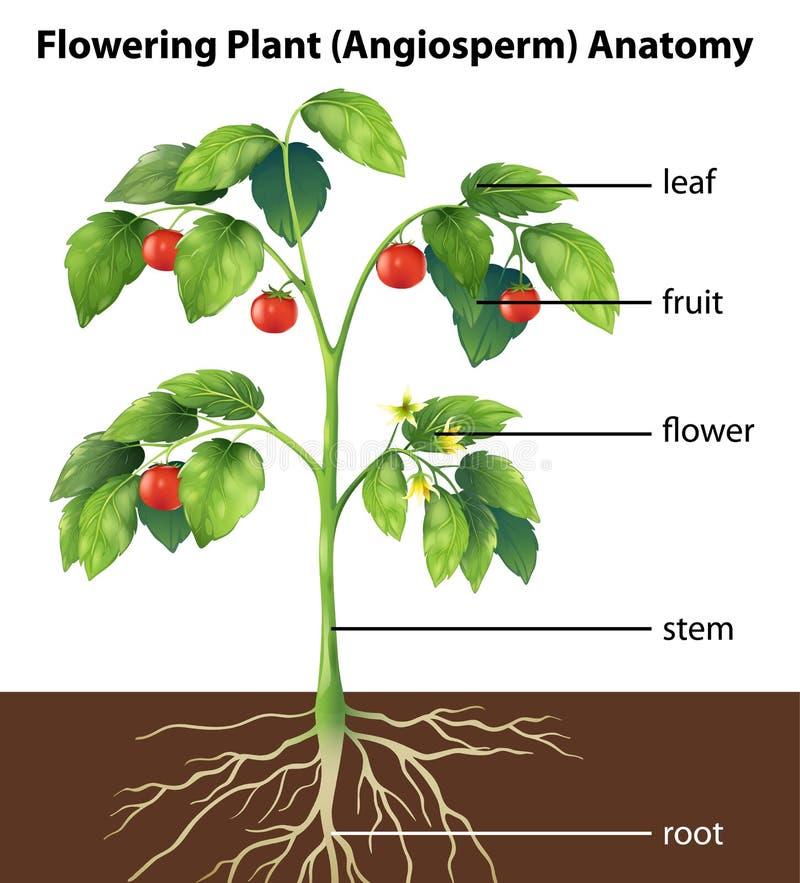 Delar av en växt royaltyfri illustrationer